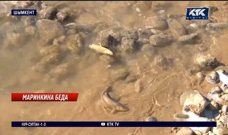 Жители Шымкента спасают рыбу из Бадама