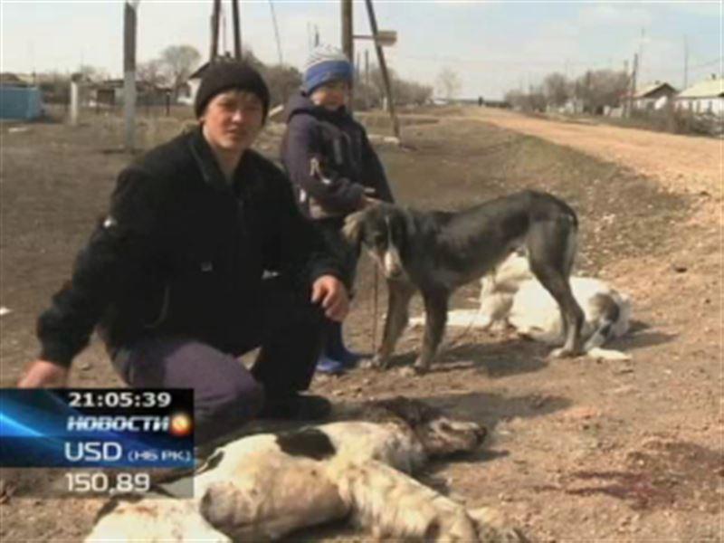 Жители Карагандинской области обвиняют ветеринара в жестоком убийстве собак