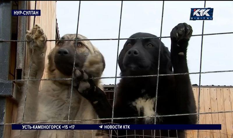 Зооактивисты требуют принять закон о защите животных, депутаты – «за»