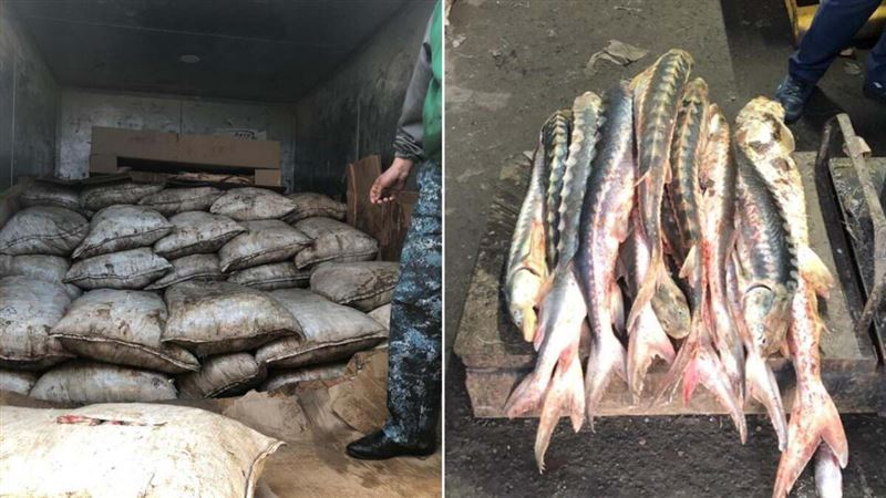 51 кг красной рыбы и 2,5 тонны леща изъяли полицейские ЗКО