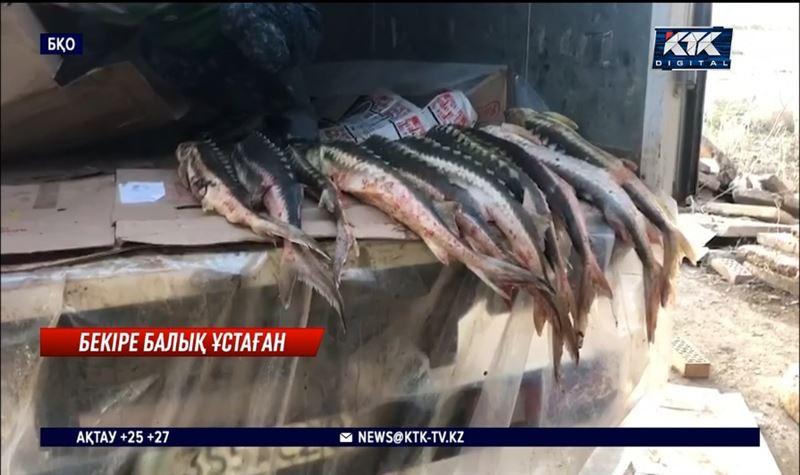 Орал-Атырау тас жолында үш тонна балық тиеген браконьер ұсталды