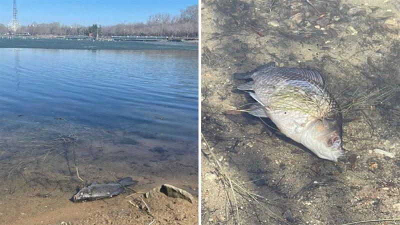 Что говорят о мертвой рыбе в парке Караганды
