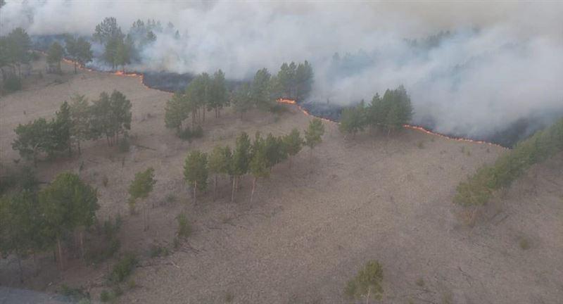 Пожар вспыхнул в сосновом бору Павлодарской области