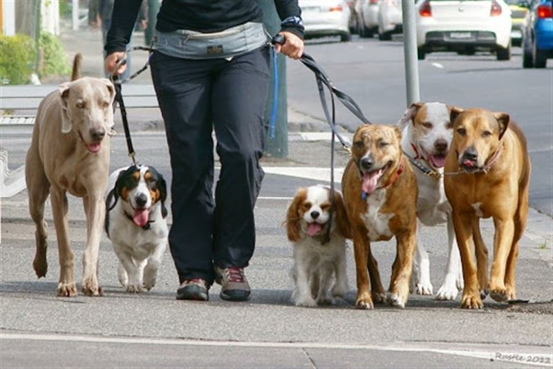 За нарушение правил содержания собак и кошек к адмответственности привлекли около 300 человек в Нур-Султане