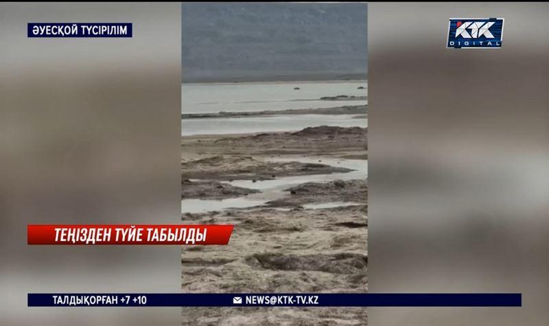 Каспий жағасынан 20 түйенің өлексесі табылды