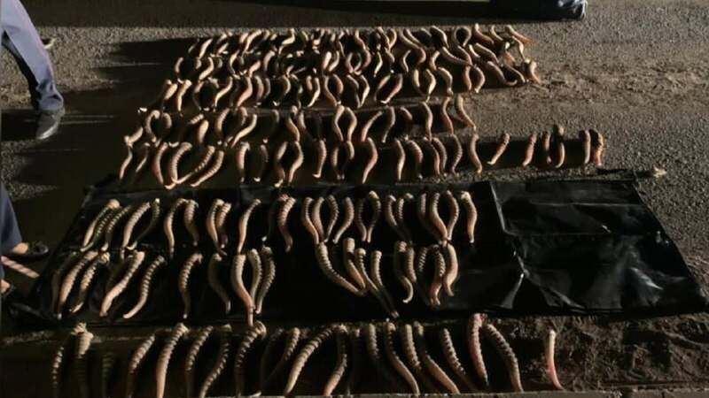 Полицейские изъяли у жителя Уральска более 200 рогов сайги