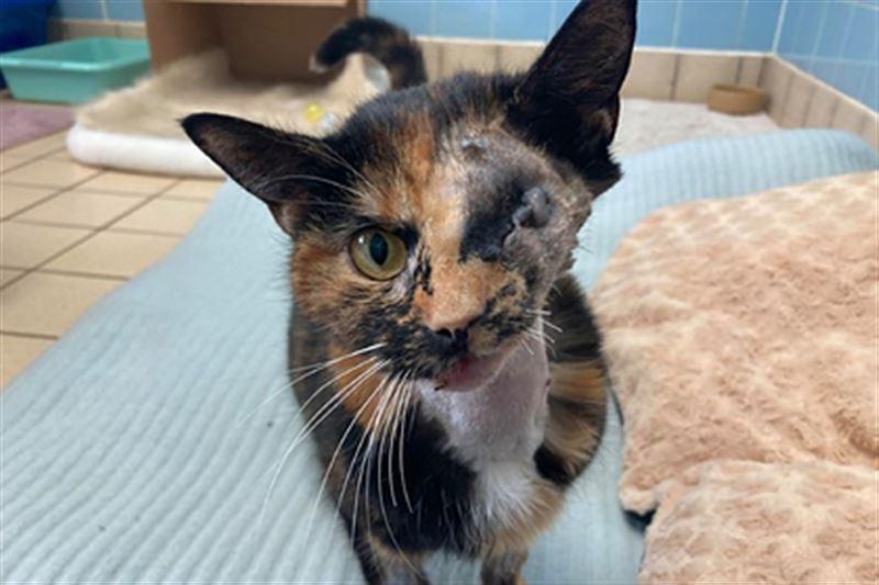 16 дней от людей скрывалась кошка, попавшая под автобус