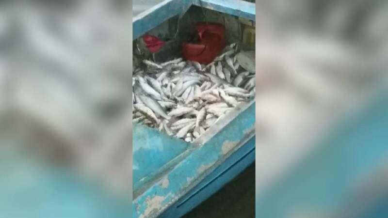 Около 130 кг рыбы изъяли у браконьера