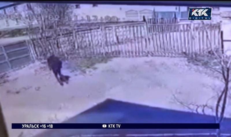 В Павлодаре два призывника решились на побег