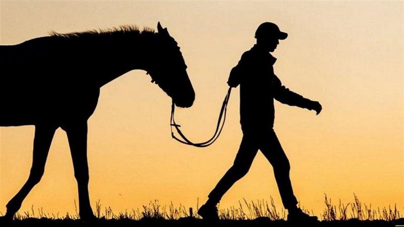 Лошадь похитили у мужчины в Карагандинской области