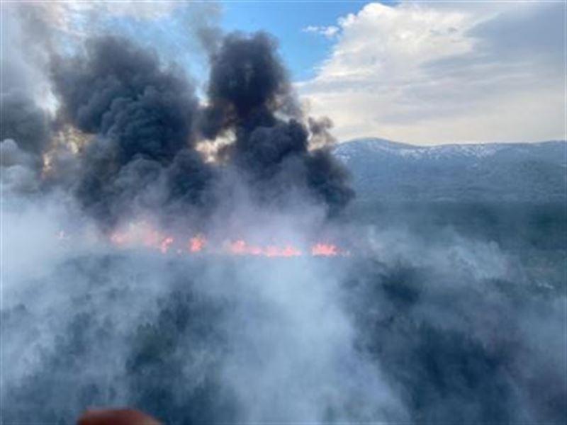 В Восточно-Казахстанской области задержали возможного виновника крупного лесного пожара в Риддере