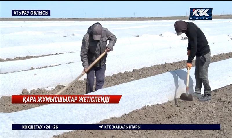 Атырау облысында көктемгі жұмысқа неге өзбек азаматтарын шақырды?