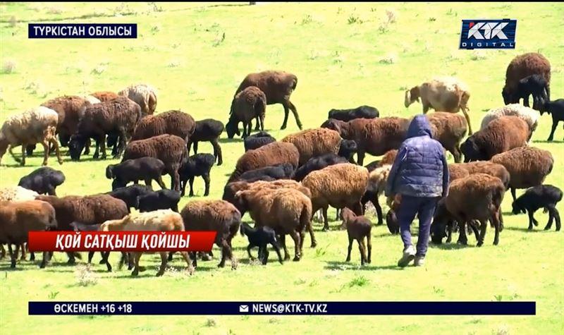 Сенген қойын сатып жіберген – Түркістан облысы