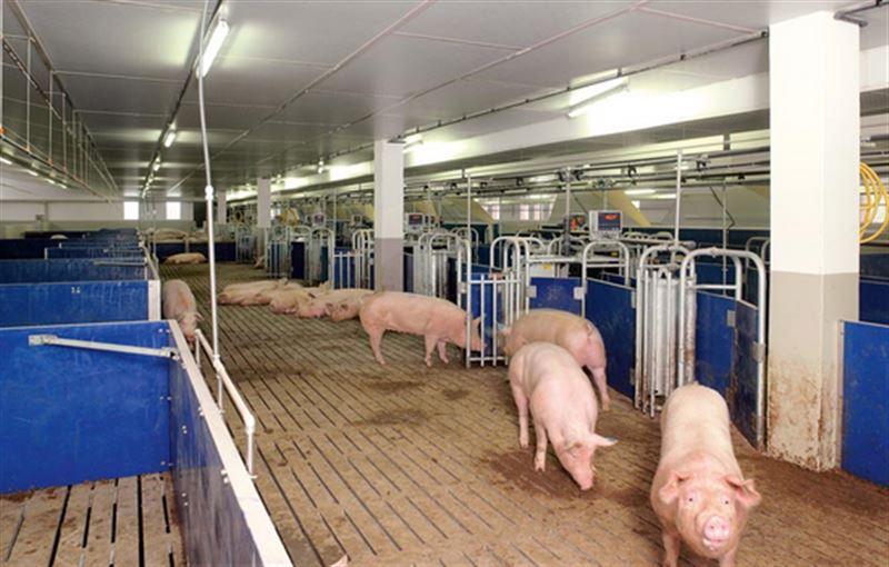 Свиноферма около Актобе обязана выплатить штраф в 7 млрд тенге