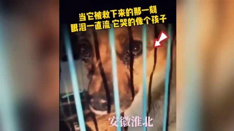 «Плачет»: реакция собаки на ее спасение с бойни растрогала Сеть