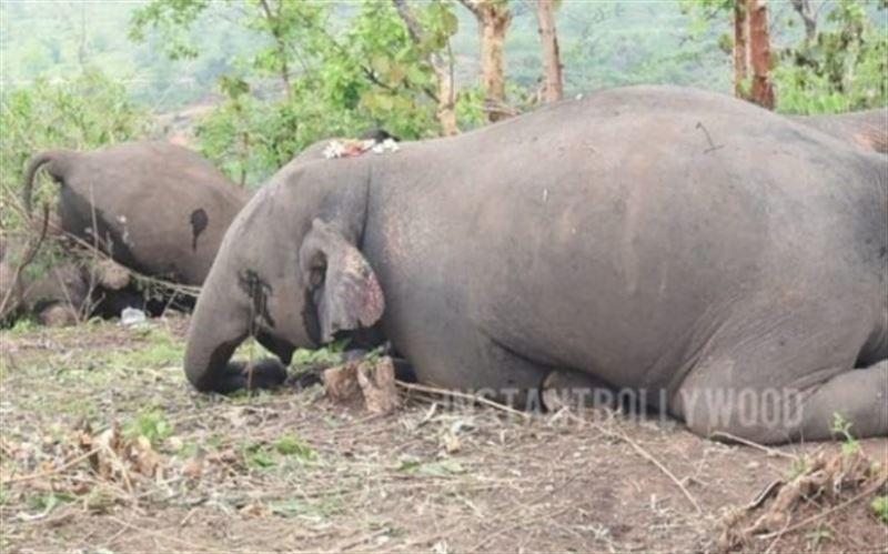 18 слонов убило ударом молнии
