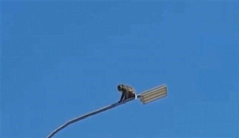 Обезьяна забралась на фонарный столб в Сарыагаше
