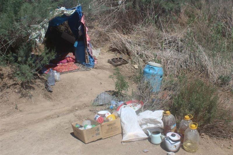 Около 400 кустов конопли изъято у мужчины в Кызылординской области