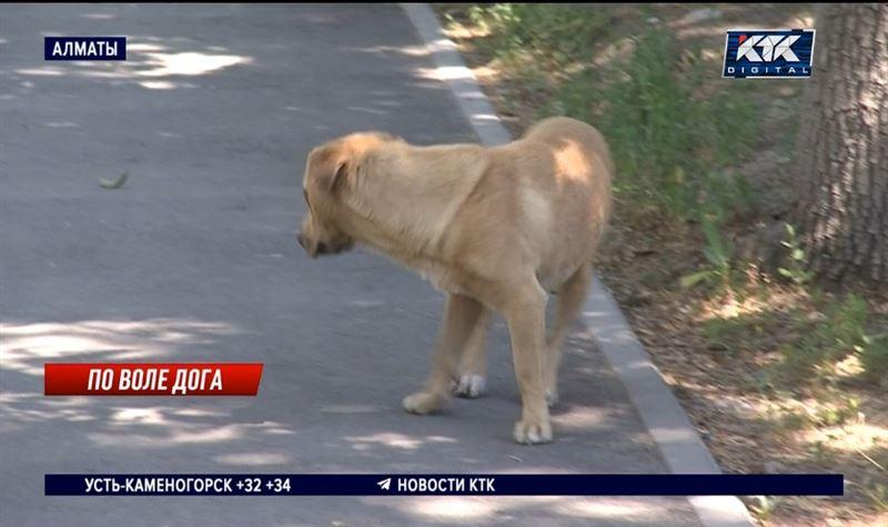 В Алматы усилили отлов бродячих собак