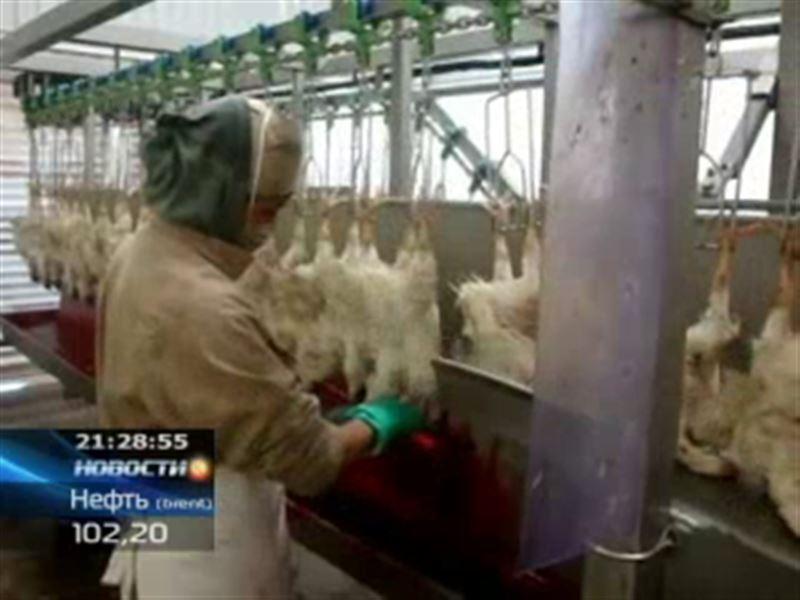 В Нидерландах уничтожили более 11 тысяч кур из-за вспышки птичьего гриппа