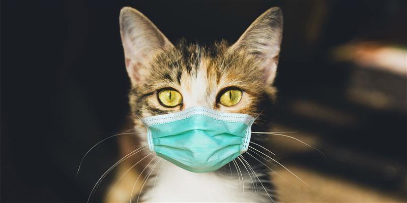 Ученые назвали наиболее восприимчивых к коронавирусу животных