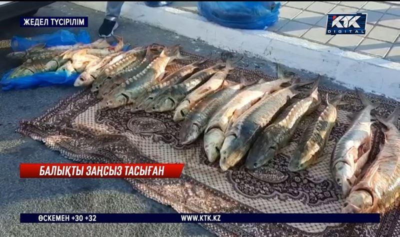 Ақтауда 215 келі бекірені заңсыз тасымалдаған