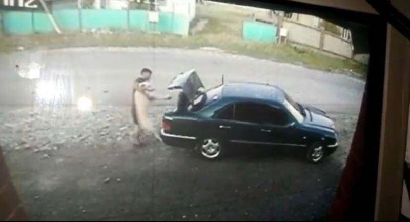 Кража породистой собаки попала на видео в Талдыкоргане