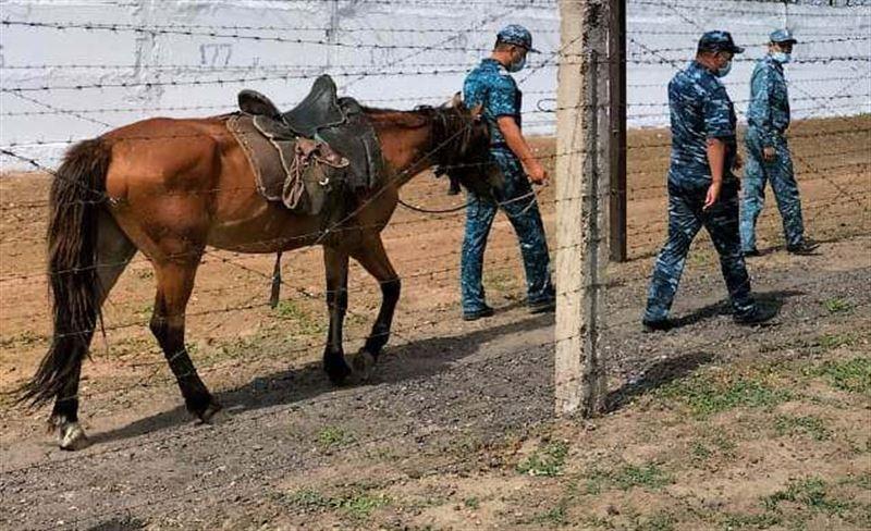 В колониях Карагандинской области ищут подкопы с помощью лошадей