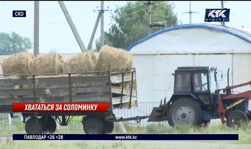 Из-за дорожающего сена вырастут цены на молоко и мясо – эксперты