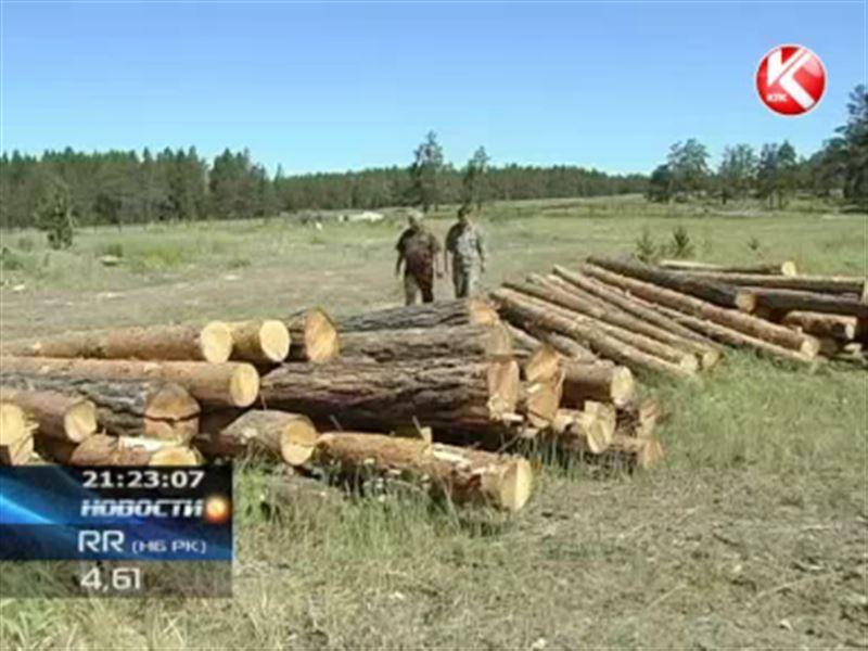 В Бурабайском природном парке браконьеры вырубили  деревья, которым больше 60 лет