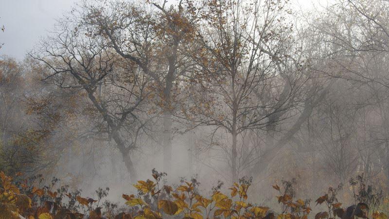 В трех областях Казахстана ожидаются туман и заморозки