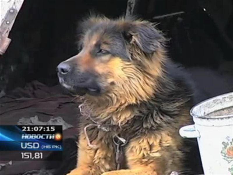 В Карагандинской области собака насмерть загрызла ребенка