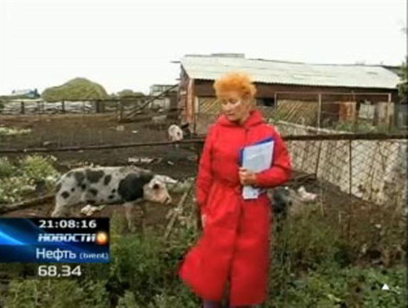 В Северном Казахстане крестьяне после легализации не только не обрели дополнительные участки, но и лишись того, что имели