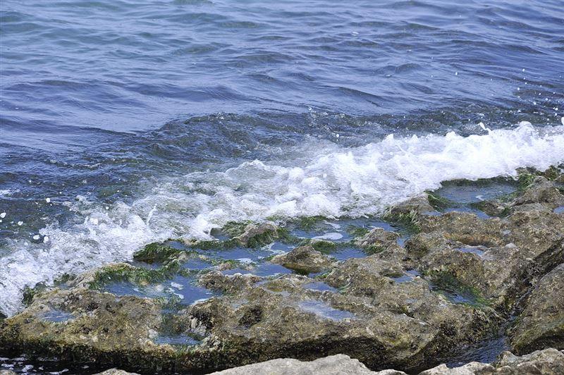 Сенат РК ратифицировал протокол о защите морской среды Каспийского моря