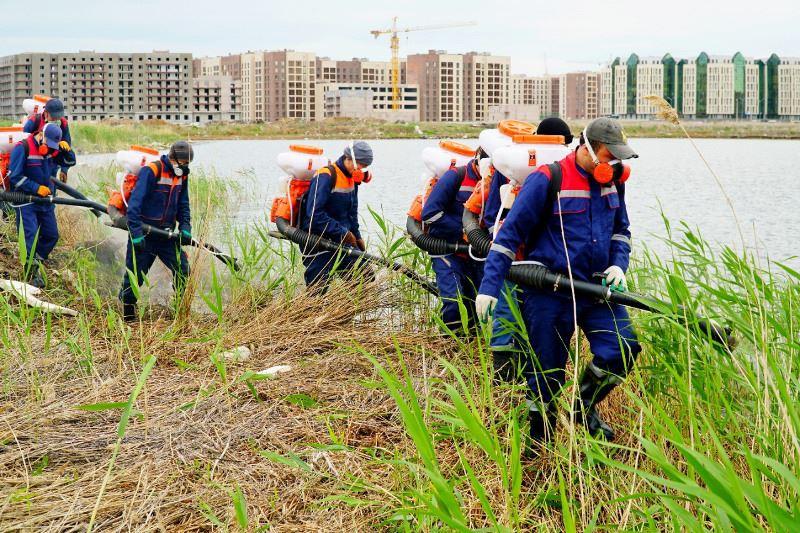 Грызунов и насекомых массово травят в Нур-Султане