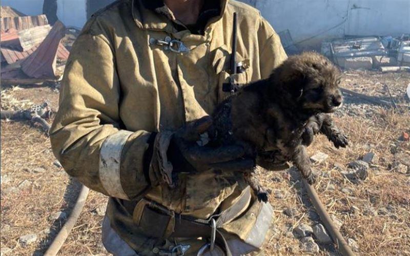 Казахстанцев восхитило спасение щенка из огня