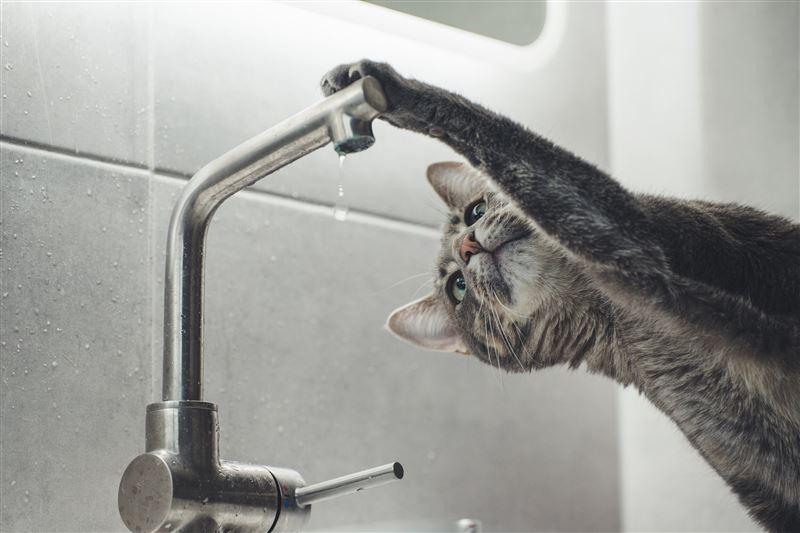 В ночь на 15 октября в центральной части Алматы отключат холодную воду