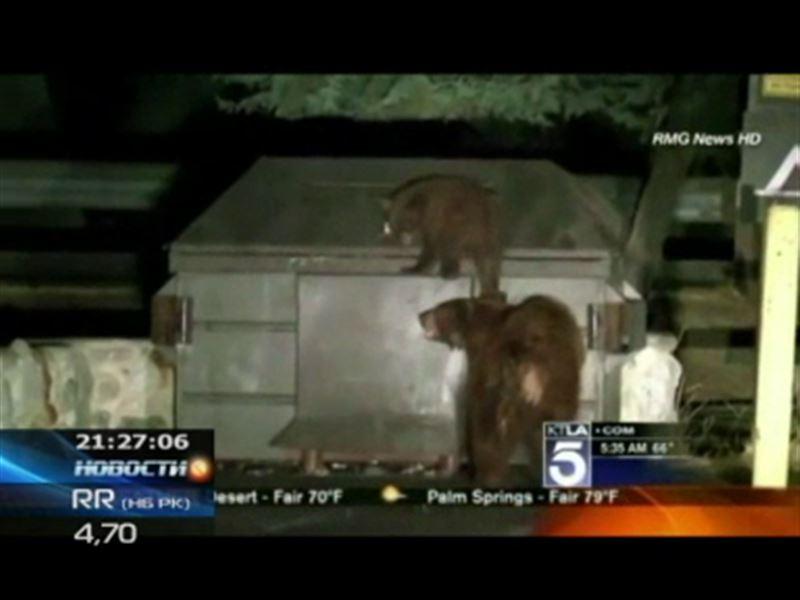Как в Калифорнии спасали медвежонка