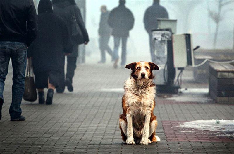 Службы отлова будут иметь доступ к базам данных домашних животных при акиматах