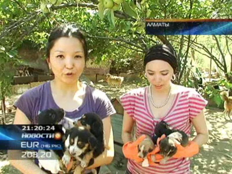 Защитники животных вновь предложили властям стерилизовать бродячих собак, а не уничтожать их