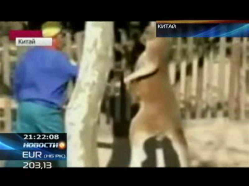В Китае работник зоопарка подрался с кенгуру