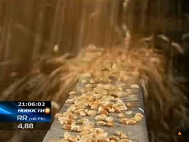 Элеваторы Северного Казахстана не справляются с объемом созревшего зерна, и хлеб уже начинает портиться