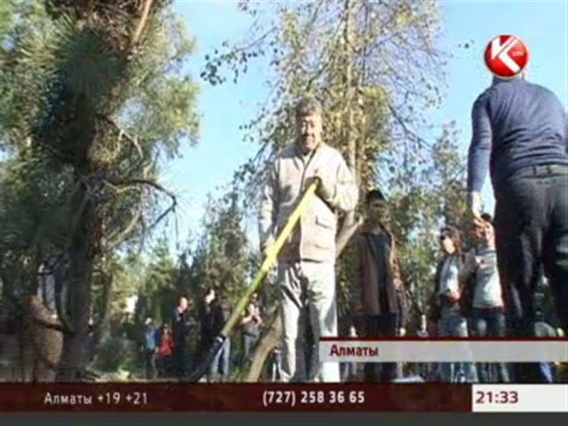 В минувшие выходные аким Алматы высаживал ёлочки в парке Горького