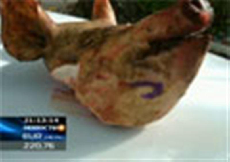 Заместителю председателя городского филиала партии «Нур Отан» в буквальном смысле подложили свинью
