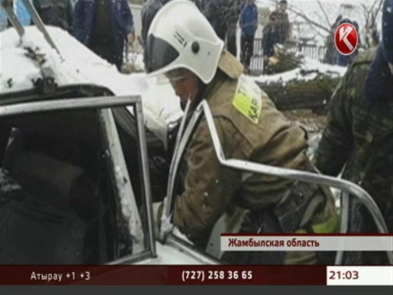 В Жамбылской области рухнувшее дерево расплющило несколько машин