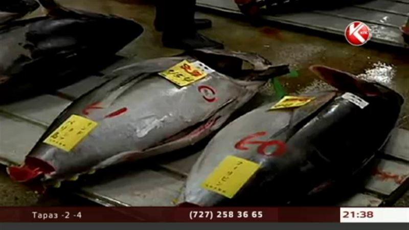 Владелец сети ресторанов в Токио приобрел тунца за 70 тысяч долларов