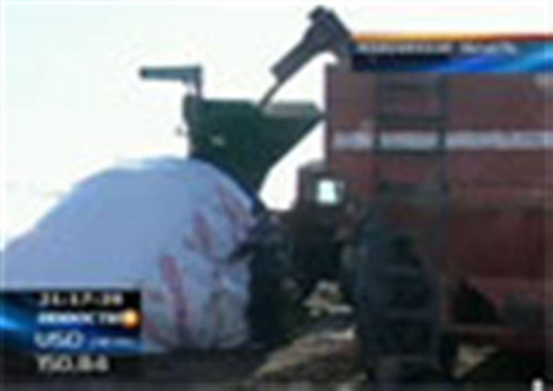Акмолинские агрономы освоили  новый способ хранения пшеницы