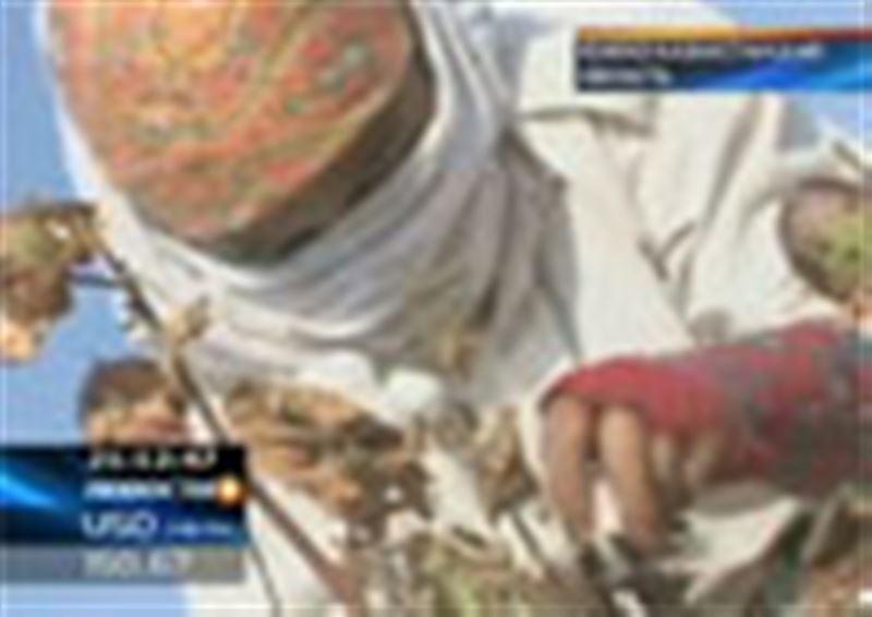 Южноказахстанские хлопкоробы могут остаться без урожая, к уборке крестьяне приступили лишь на днях