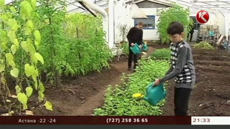 Огород из стеклянных бутылок кормит жителей североказахстанской глубинки