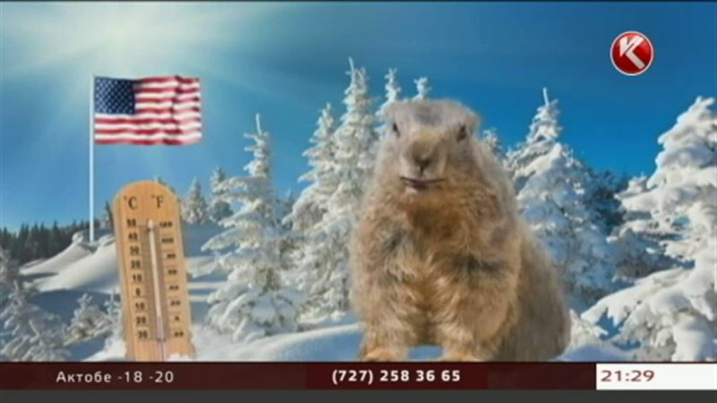 Сурок Фил предсказал казахстанцам короткую зиму